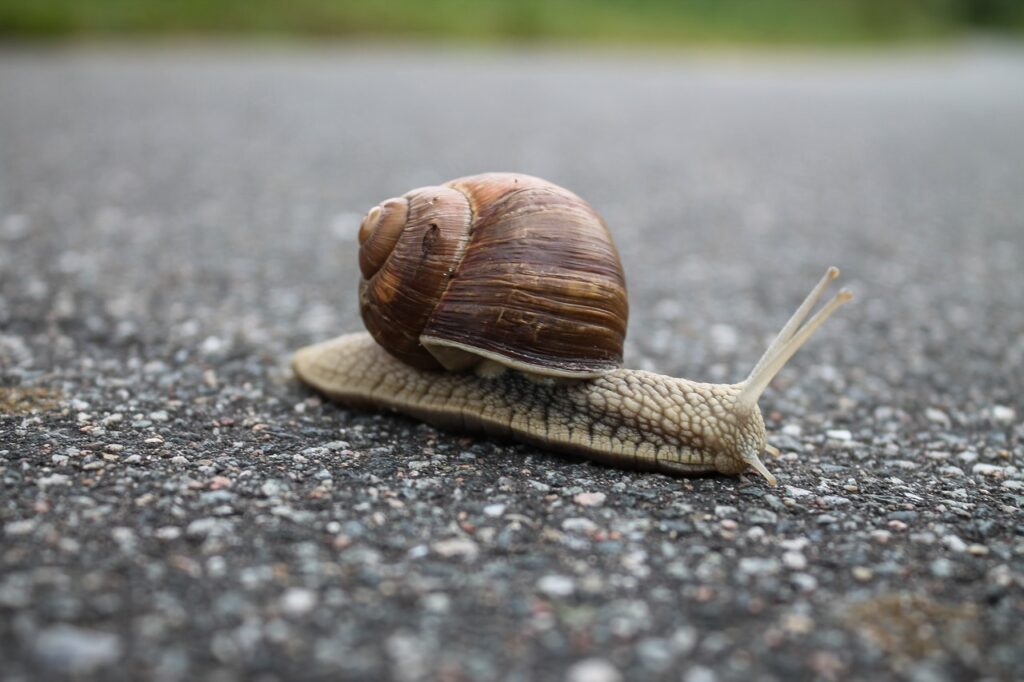 Your Website is Under Performing - Slow Site Speed